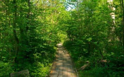 Dalby Söderskog Nationalpark